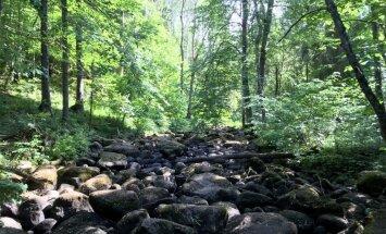 Velna klēpis urdzošajā Nāružas upītē – apslēptais dabas brīnums netālu no Ērgļiem