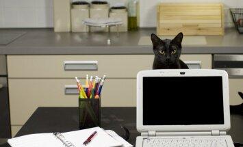 14 frāzes, kuras sapratīs ikviens kaķa saimnieks