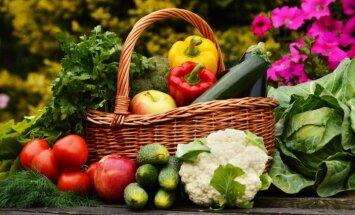 Плохая погода привела к росту цен на овощи в Европе