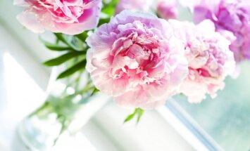 Kā vārds ietekmē tavu dzīvi: Rasma, Rasa, Maira