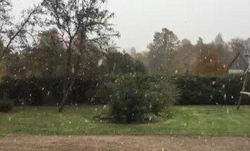 Video: Ugālē lēnām sniega pārslām krīt pirmais sniegs