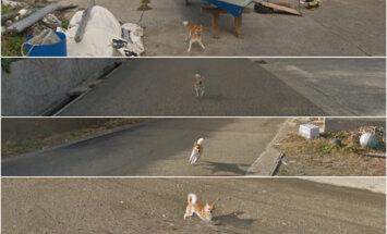 Interneta hits: Populārs kļuvis suns, kas sekojis 'Google Street View' automašīnai