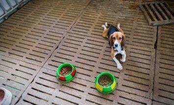 Kas ir karbamīds – viela, ko atrada 'Dogo' barībā, un vai tā tiešām ir indīga?