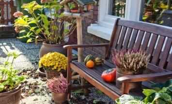 Kas jāizdara dārzā un pagalmā līdz 26. oktobrim?