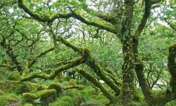 Spocīgi, bet reāli meži kā no pasaku grāmatām
