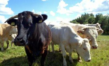 Pērn pirmo reizi pēdējo gadu laikā samazinājies Latvijas pārtikas un lauksaimniecības produktu eksports
