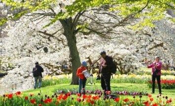 Foto: Eiropa vienos ziedos – ļaudis steidz baudīt krāšņo pavasari dārzos un parkos
