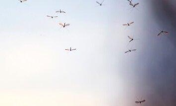 Krievijā pret kukaiņiem Pasaules kausa stadionā Volgogradā cīnās ar vaniļu