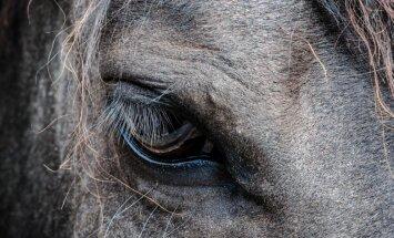 Aitu Barbara un zirgu Niklāvs dod brīvdienas rokdarbniecēm. Senču tradīcijas