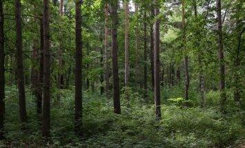 Без вести пропавший рижанин найден мертвым в лесу около Юрмалы