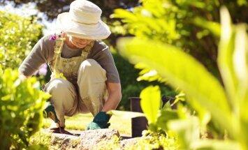 Где в саду можно использовать опилки