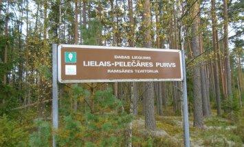 Lielais Pelečāres purvs – vieta rudens krāšņuma un gājputnu vērošanai