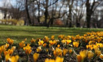 Aprīļa nogale būs saulaina; prognozē arī lietu