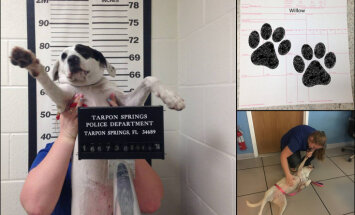 """Полиция в США арестовала собаку за то, что она была """"опасно миленькой"""""""