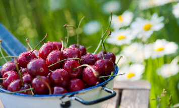 В какой воде мыть ягоды?