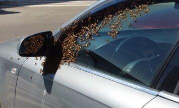 Foto: Pie tirdzniecības centra 'Domina' mašīnu ieskauj prāvs bišu spiets
