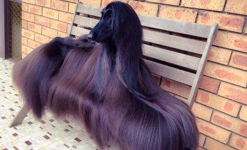 ФОТО: Поиски самой красивой в мире собаки можно считать законченными