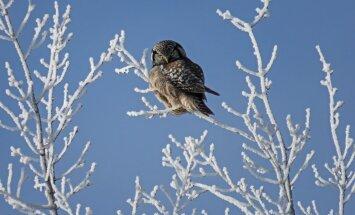 Прогноз: холода в Латвии могут продлиться до апреля