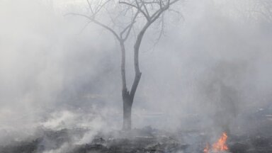 Ventspils novadā Ances purvos un mežos izcēlies vairākus hektārus plašs ugunsgrēks