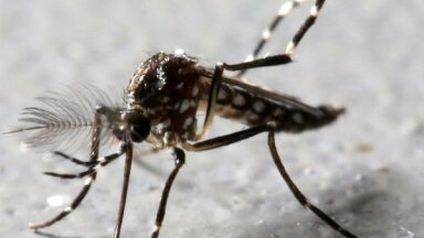 Накормите своего первого комара. Профессор Спуньгис о том, как жить с клещами, комарами и другими насекомыми