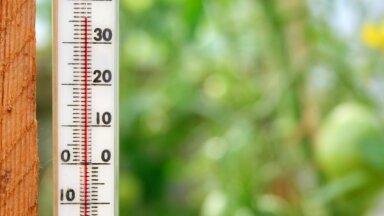 В теплице как в бане: Марис Нарвилс рассказывает о том, как защитить садовые и тепличные растения от жары
