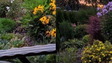 Foto: Dārzs Igaunijā, kurš plūca laurus rudens ainavu konkursā