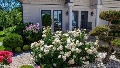 Foto: Šīs vasaras skaistākie īpašumi un dārzi Jūrmalā
