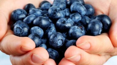 Эксперт поясняет: чем так полезны ягоды черники?