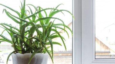 Топ-10 комнатных растений, которые не стоит держать дома