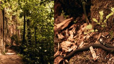 ФОТО. Могучая скала Личу-Ланьгю, скрытая от любопытных глаз за зеленой пеленой