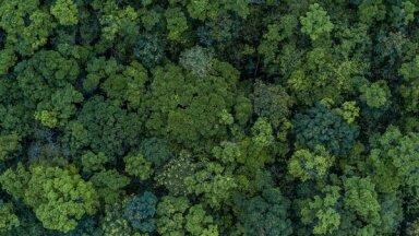 Tallinā notiks konference 'Forest', kurā uzstāsies Ziemeļeiropas vadošie nozares eksperti