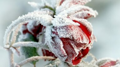 Семь чудесных растений, которые цветут зимой