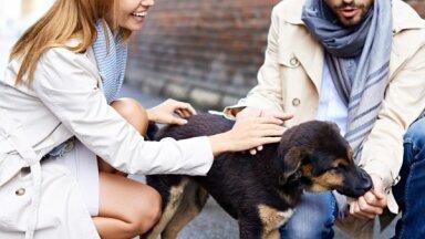 Кошки и собаки вместо детей: пары чайлд-фри делают выбор