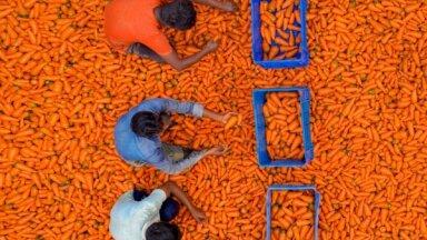 Dienas ceļojumu foto: Burkānu ražas laiks Bangladešā