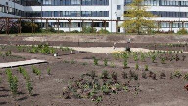 Foto: Bulduru Dārzkopības vidusskolā top robotizēts digitālais dārzs