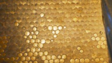 Medus raža šogad no vienas bišu saimes palielinājusies par vidēji 15 kilogramiem
