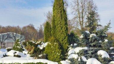 Сад, цветник и комнатные растения в декабре: нужно ли с ними что-то делать?