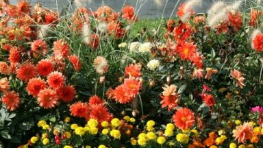 Лучшие низкорослые цветы для дачной клумбы, которые цветут все лето