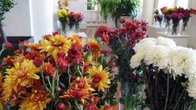 ФОТО. В Рундальском дворце проходит выставка хризантем