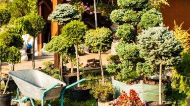 Рижане и гости города смогут сажать деревья в парках столицы
