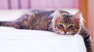 Доказано учеными: Кот в постели - полезно для здоровья