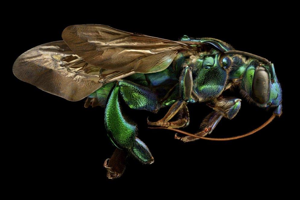 Мини-миры. 20 ФОТО под микроскопом — победителей конкурса Nikon Small World