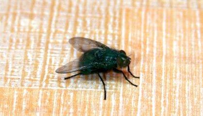Видеть во сне летающих и жужжащих мух — наяву чужая назойливость выведет вас из себя.