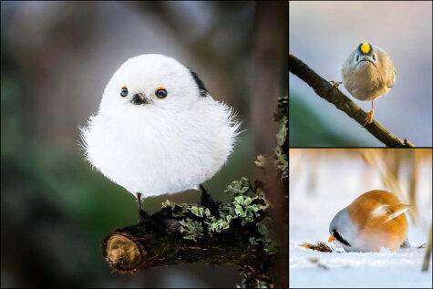 Свиньям назло: 12 ФОТО птиц, которые могли бы сниматься в Angry Birds без грима