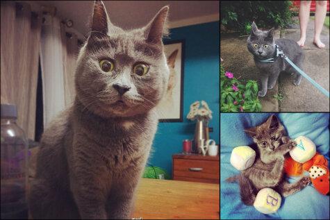 Этот вечно удивленный котенок не должен был выжить, но ему уже четыре года!