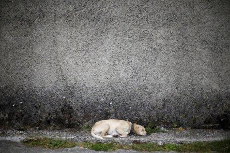 Portugāles ciemats, kurā, ieskaitot suni, mitinās 50 iedzīvotāju