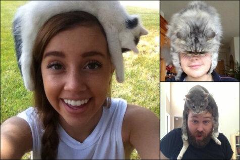 Котошапки. 19 фото, которые заставят тебя взять кота и положить его себе на голову