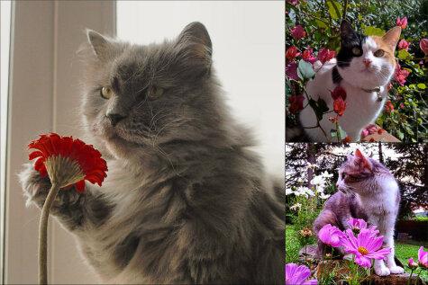 Весмяу пришла, или 16 кошек — настоящих королев этой весны