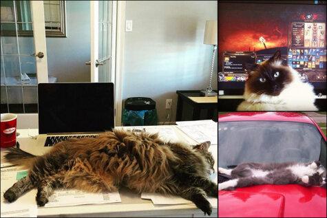 ФОТО: Я тут лежу, и не… волнует, или Топ-19 котов-мастеров бросить кости