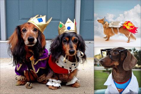 19 собак, которые абсолютно готовы к Хэллоуину. А ты?